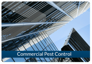 pest-control-london-commercial-pest-control