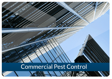 Beaver Pest Control London Commercial