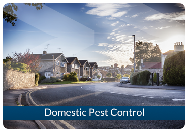 Beaver Pest Control London Domestic
