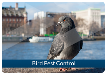 Beaver Pest Control London Bird