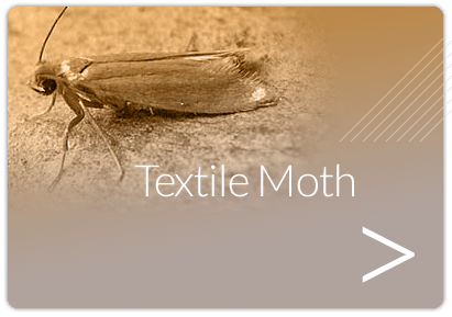 Moth Pest Control London Moth Treatments Moth Control