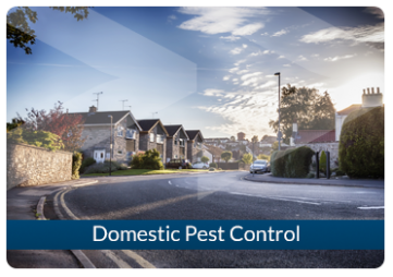 Domestic Pest Control Beaver London