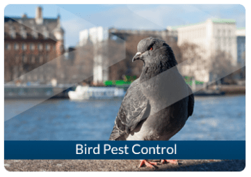 Bird Pest Control Beaver London
