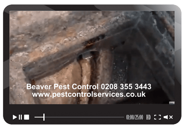 cockroach control, Beaver Pest Control London
