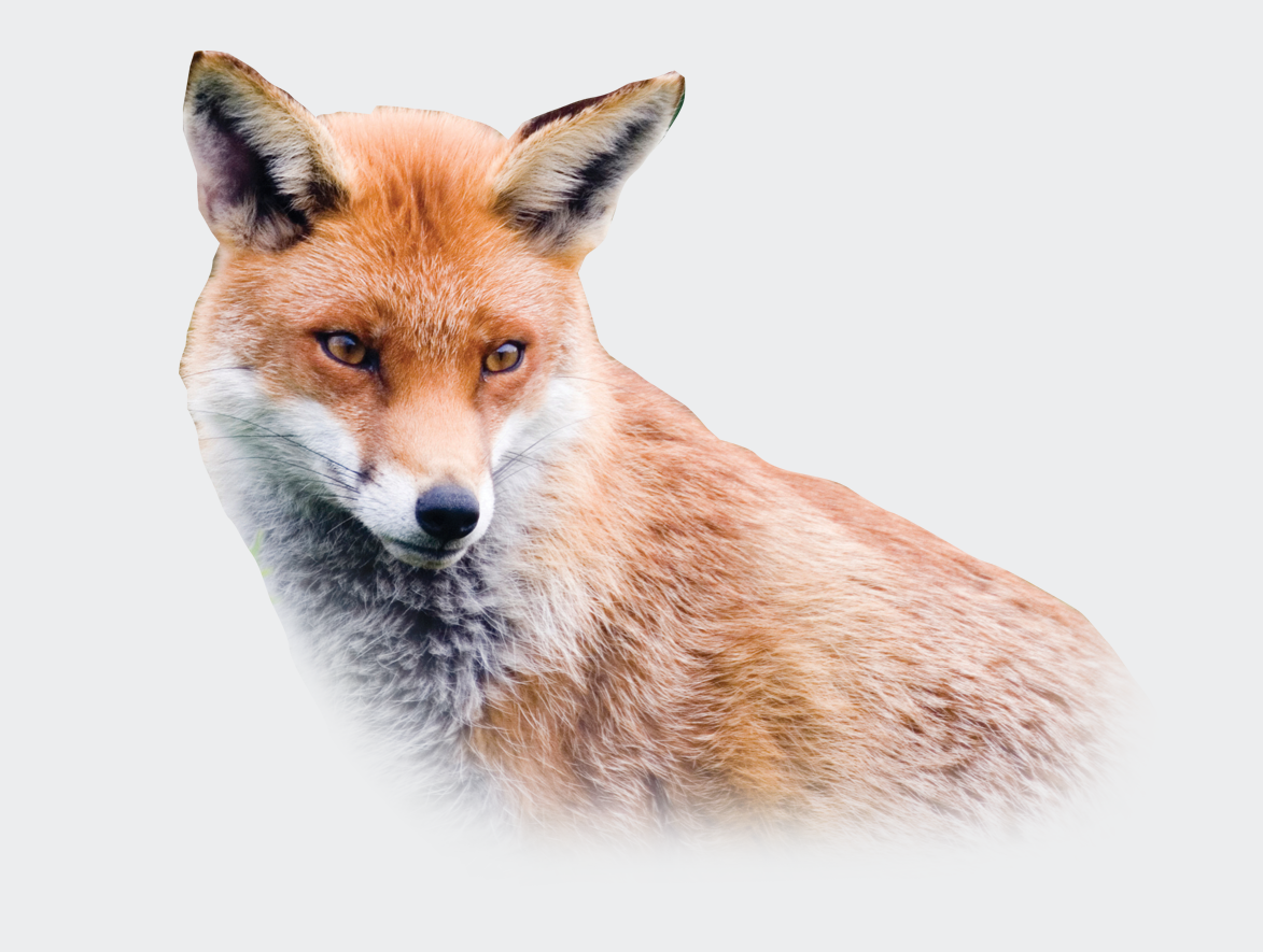 Fox Control, Beaver Pest Control London