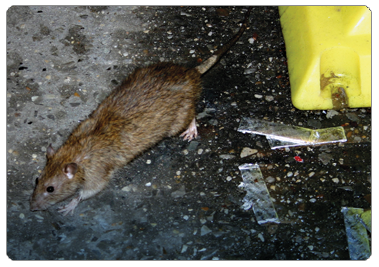 Corporate & Office Pest Control, Beaver Pest Control London