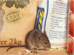 Rodent Control London Mouse